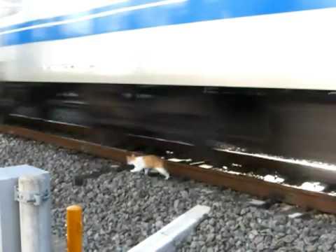 Мачка против воз