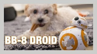 Sphero BB-8 Droid unboxing + Puppy review | iJustine