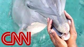 Cheerleader drops phone; dolphin brings it back