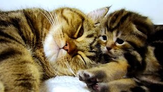 Mom Cat Talking to her Cute Meowing Kittens  20 min BONUS Video