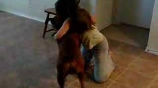 Boxer Dog Wrestling, Round 1