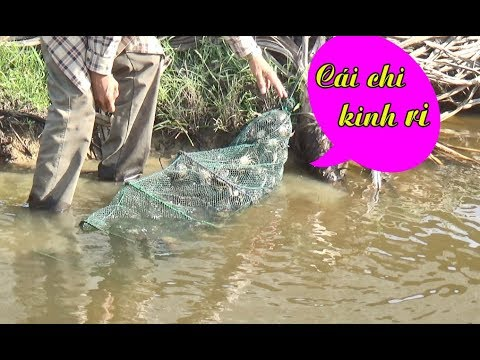 Giăng lưới 13 tầng ĐỊA NGỤC bắt cá và kết quả bất ngờ sau 1 đêm