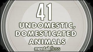 41 Undomestic, Domesticated Animals - mental_floss on YouTube (Ep.8)