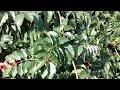 Пример видеозаписи с основной камеры DEXP Ixion EL150
