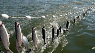 Everyone should watch this Fishermen's video - Amazing Automatic Net Fishing Line Catching Big Fish