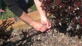 Drip Irrigation Kit - Rose and Shrub Irrigation Kit