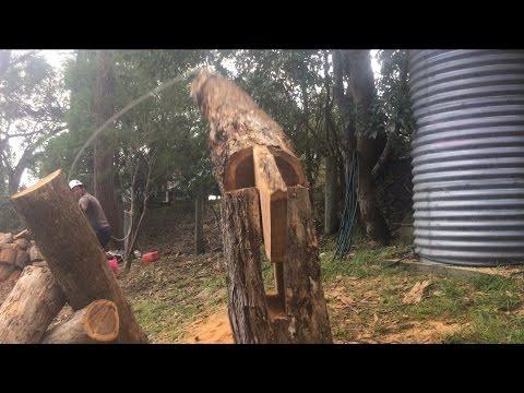 Zaujímavá technika pílenia stromu