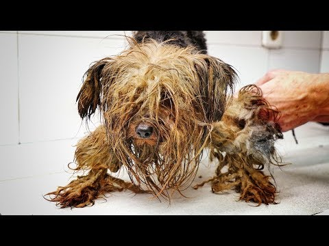 AMAZING! This dog spent his entire life inside a dark box ... we had to save him !