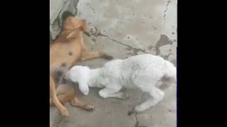 You will laugh watching this video