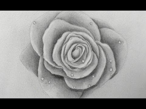 Imagenes De Corazones Reales Para Dibujar
