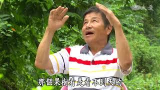 大爱电视台-农夫与他的田系列专访-台东农夫