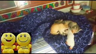 TOP10!Funny Cats Compilation|😻lovely kittens, 😻super videos😋,enjoying, milking Everyday😜Together