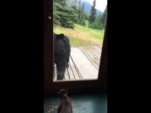 Вирално видео: Мачка vs. мечка