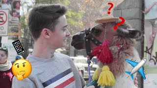 I Answered Your Travel Questions And Met A Llama   Noah Schnapp
