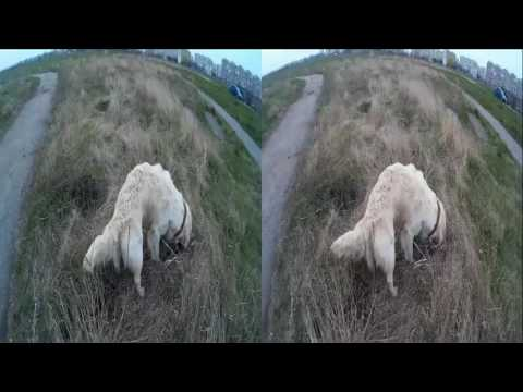 Dog DUNE ( Part 3 of 5 ) !Nora's Study and Mole Search))) 3D VIDEO