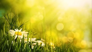 Morning Relaxing Music - Uplifting Feeling and Positive Energy (Ariana)