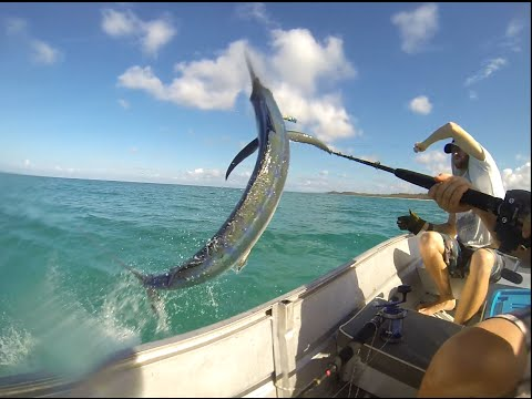 fraser island marlin from a tinny Nov 2014