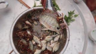 Gỏi Cá Nhảy - Chú Anh Suýt Chết Vì Ăn Cá Rô Phi Vây Nhọn | HVK