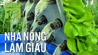 Bí quyết trồng rau thủy canh kiếm tiền tỷ | VTC16