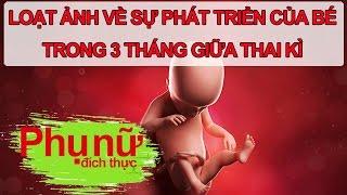 Loạt Ảnh Về Sự Phát Triển Của Bé Trong 3 Tháng Giữa Thai Kì