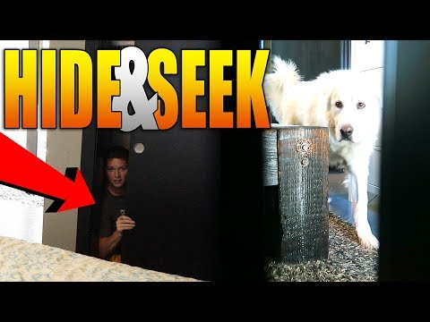 PLAYING HIDE AND SEEK WITH MY DOG KODA (Super Cooper Sunday #127)