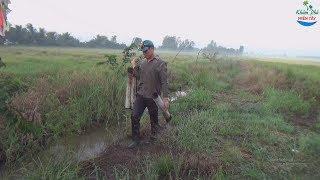 14 | Đặt trúm lươn mùa lúa hè thu | eel