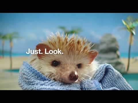 Risk Test Hedgehogs :60 | Type 2 Diabetes Prevention | Ad Council