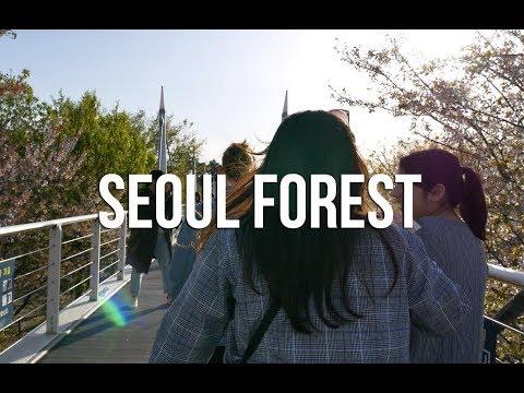 SEOUL FOREST ENTRE AMIS