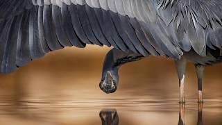 Wings - Nicolai Heidlas
