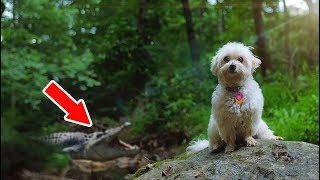 PUPPY EXPLORES ABANDONED FOREST!! | MINI MOVIE