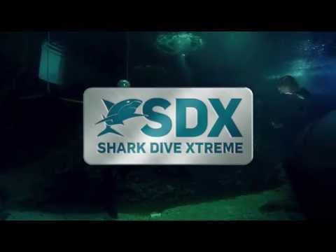 video Melbourne Aquarium Shark Dive Experience