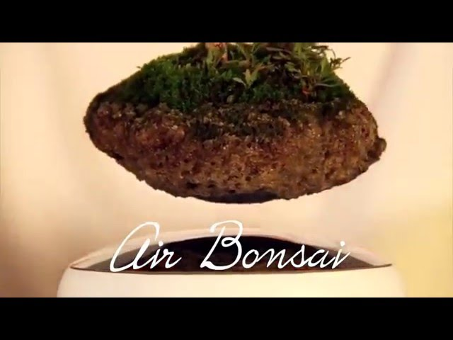 Air Bonsai, la tecnología toca el arte del bonsai