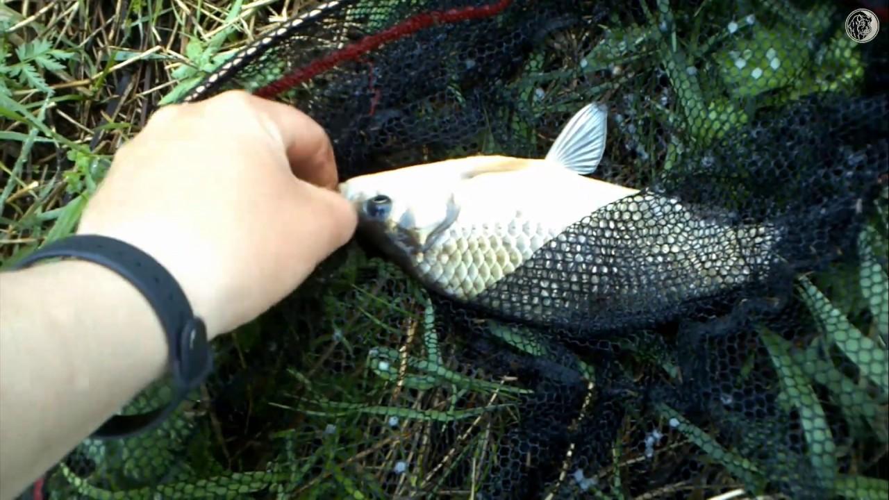 Рыбалка в гощь карачевского района брянской области