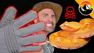 BITE PROOF? Venomous Snake vs. Gloves!