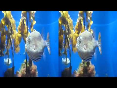 Shaw's Cowfish 3D (YT3D:Enable=True)
