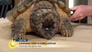 De här djuren ska du INTE köpa i julklapp - Nyhetsmorgon (TV4)