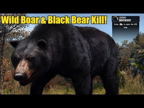 Baixar Wild Boar & Black Bear Kill! (Cabela's Big Game Hunter Pro Hunts)