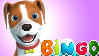 bingo piosenkę psa | rymuje dzieci | Bingo The Dog Song | Little Treehouse | Piosenki Dla Dzieci