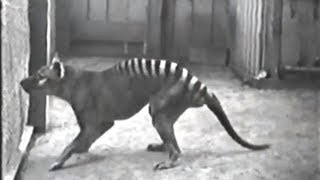10 Rare Videos of Extinct Animals