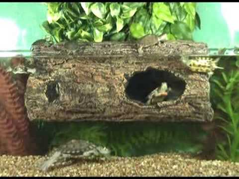Zoo Med S Floating Turtle Log Youtube