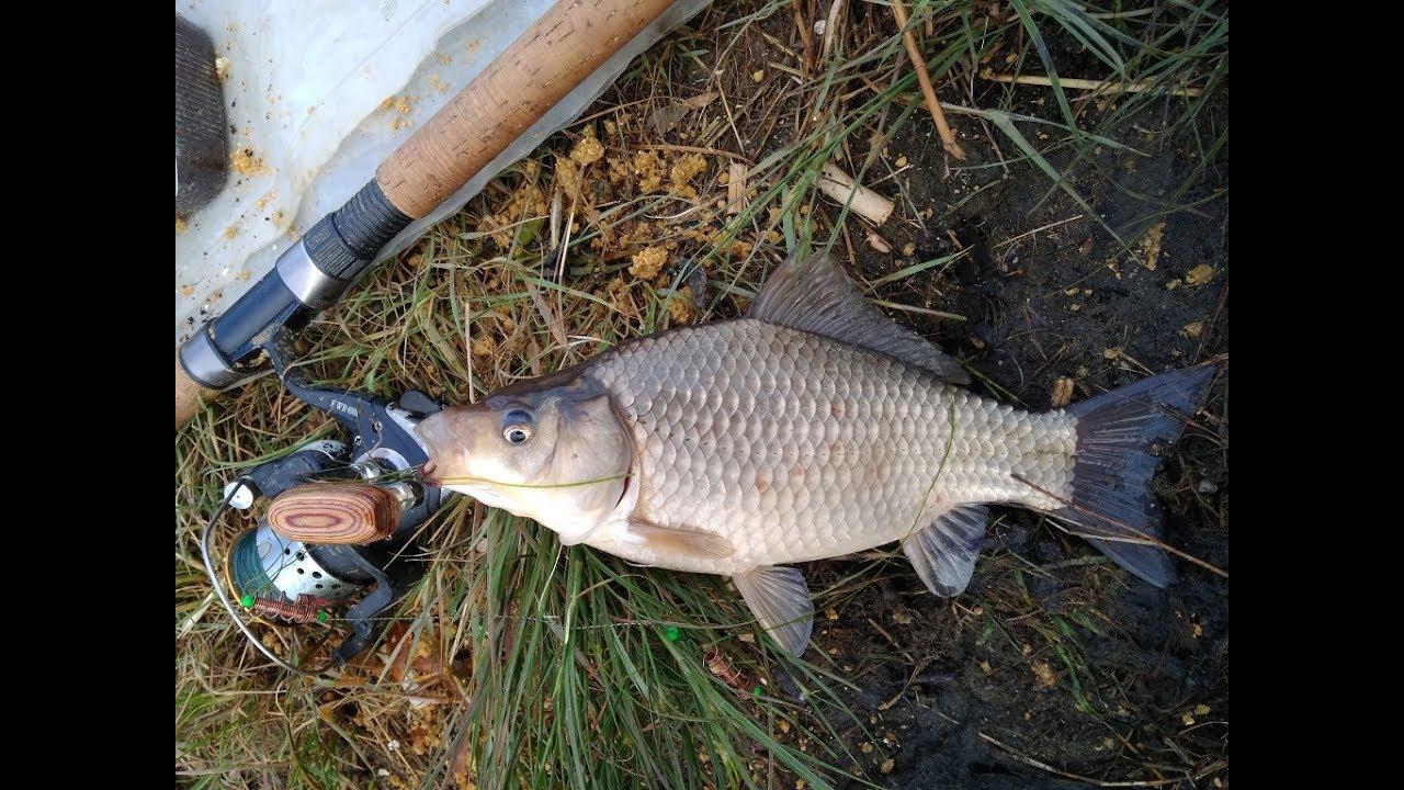 Рыбалка в челябинской области карася