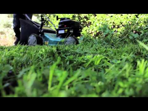 4 Top Lawn Care Tips to Maintain Your Atlanta Lawn