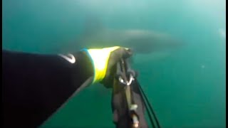 KID ATTACKED BY SHARK VIDEO - real or fake?
