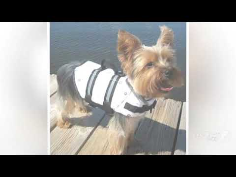 Designer Dog Swimsuits || BloomingtailsDogBoutique