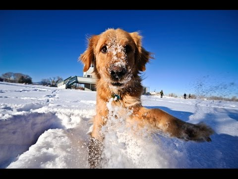 Cats and Dogs Playing in the Snow Compilation