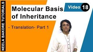 Molecular Basis of Inheritance - Translation - Part 1