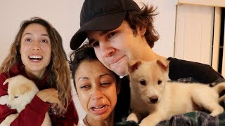SURPRISING DAVID'S GIRLFRIEND LIZA KOSHY WITH MY GIRLFRIEND'S NEW PUPPY!!