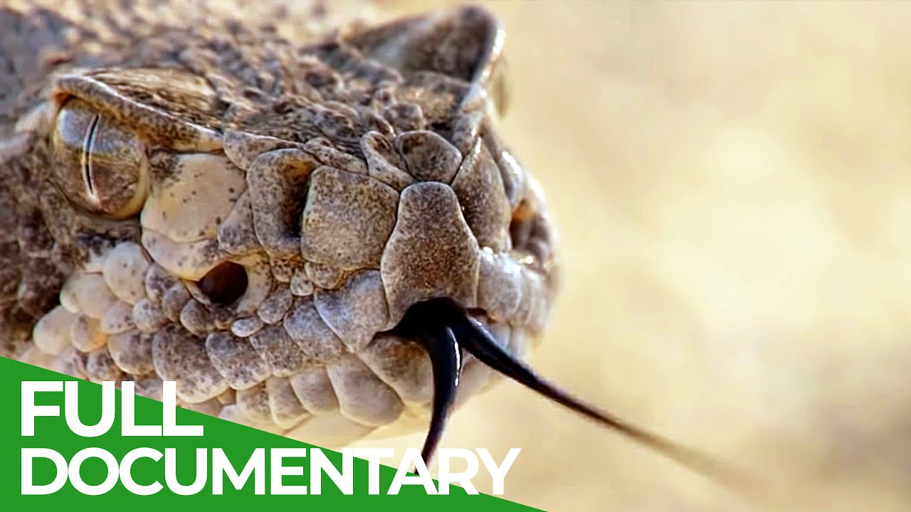 The Most Dangerous Wildlife Moments - Part 1   Free Documentary Nature