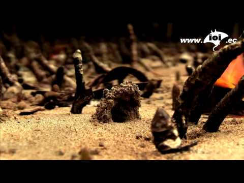 help animals galapagos ioi isablea non profit. http://www.ioi.ec/conservation/