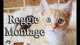 CUTE CAT MONTAGE - MEET REGGIE